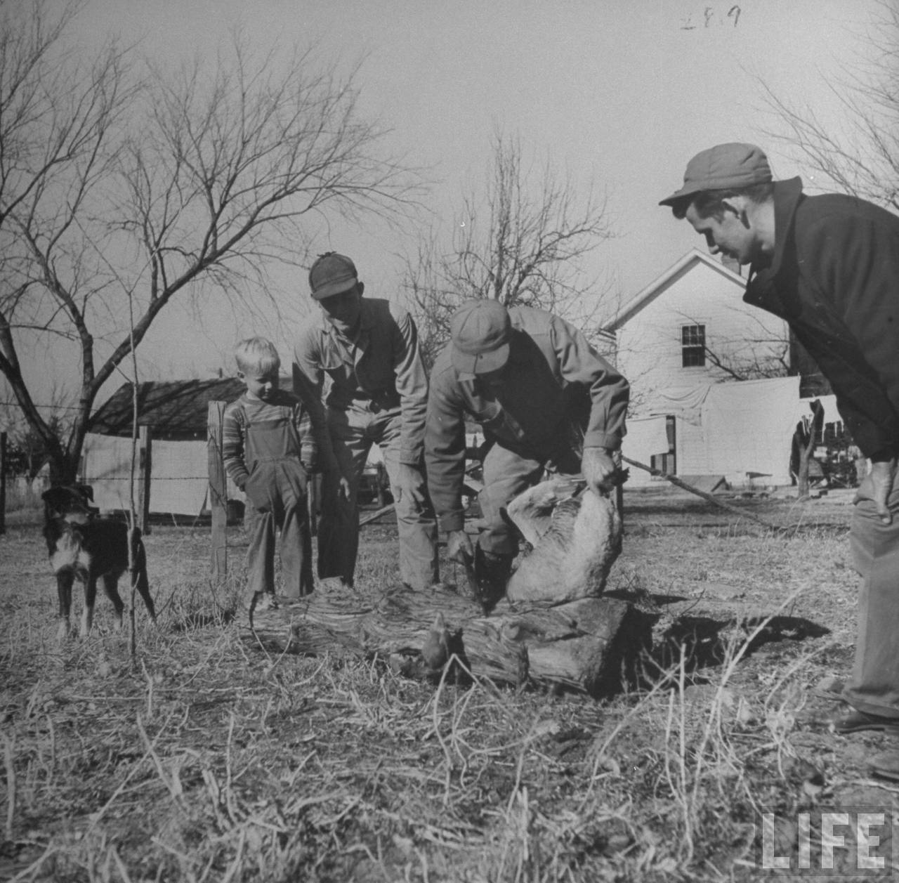Family members watching James F. Irwin (C) killing a goose for an early Christmas dinner to celebrate safe return of sons and sons-in-law from WW II.© Time Inc. Myron Davis
